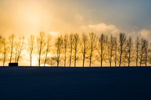 冬の夕暮れの空とシラカバ並木 美瑛町の写真素材 [FYI03408792]