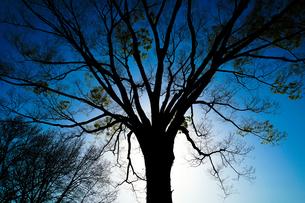 木のシルエットの写真素材 [FYI03408876]