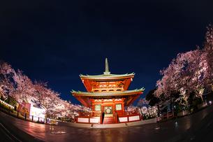寺と夜桜の写真素材 [FYI03408891]