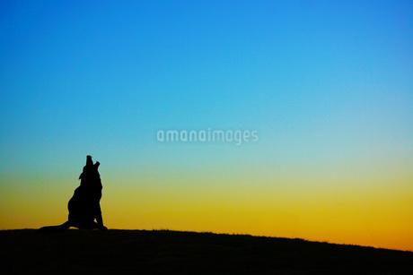 夕暮れの丘に立つ犬のシルエットの写真素材 [FYI03408895]