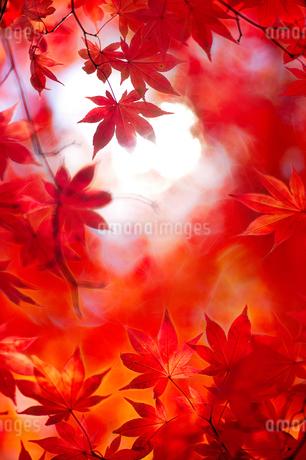 紅葉の写真素材 [FYI03408943]