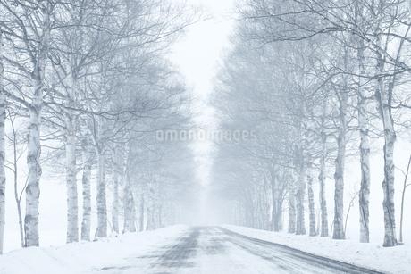冬の並木道の写真素材 [FYI03408962]