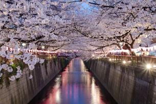 目黒川の夜桜の写真素材 [FYI03409043]