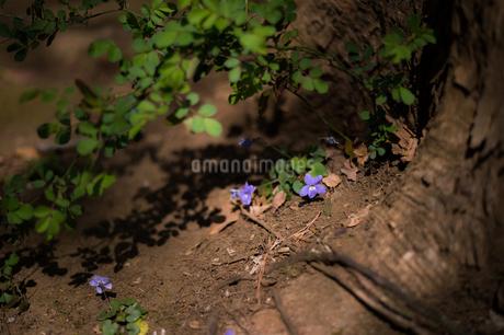 紫の花の写真素材 [FYI03409050]