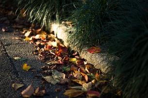 道端の落ち葉の写真素材 [FYI03409054]
