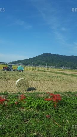 稲刈りと青空の写真素材 [FYI03409087]