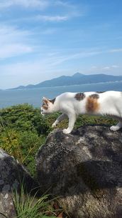 猫と海と空の写真素材 [FYI03409089]
