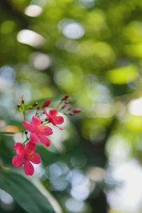 ピンクの花の写真素材 [FYI03409098]