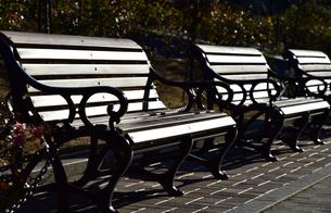 公園のベンチの写真素材 [FYI03409209]