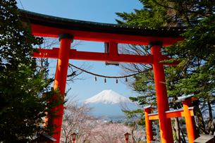 鳥居と富士山と桜の写真素材 [FYI03409222]