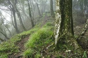 山霧に煙る甲相国境尾根の森の写真素材 [FYI03409294]