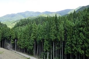 室久保林道の植林帯と甲相国境尾根の写真素材 [FYI03409315]