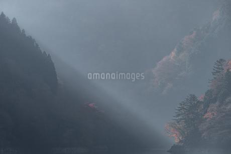 奥多摩湖畔の紅葉の写真素材 [FYI03409341]