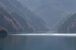 紅葉の奥多摩湖の写真素材 [FYI03409343]