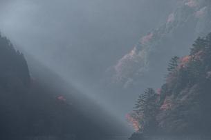 奥多摩の紅葉の写真素材 [FYI03409350]