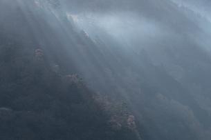 朝の光と霧に包まれる奥多摩の写真素材 [FYI03409351]