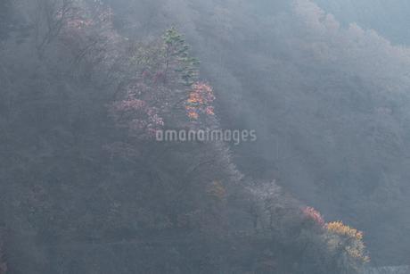 奥多摩湖畔の紅葉の写真素材 [FYI03409357]
