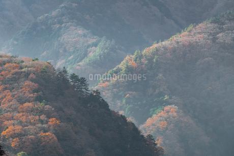 奥多摩の紅葉の写真素材 [FYI03409395]