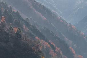奥多摩の紅葉の写真素材 [FYI03409446]