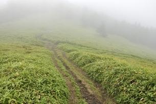 濃霧でガスる石丸峠の写真素材 [FYI03409583]