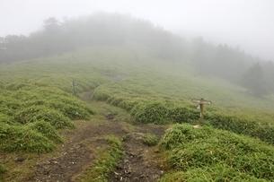 濃霧でガスる石丸峠の写真素材 [FYI03409584]