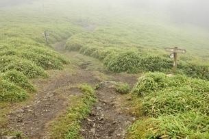 濃霧でガスる石丸峠の写真素材 [FYI03409585]