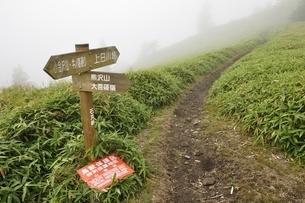 濃霧でガスる石丸峠の写真素材 [FYI03409587]