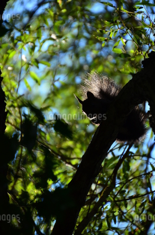 リスの影の写真素材 [FYI03409692]