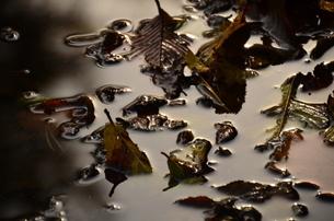 落ち葉の写真素材 [FYI03409698]