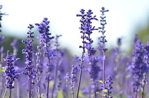 花の写真素材 [FYI03409708]