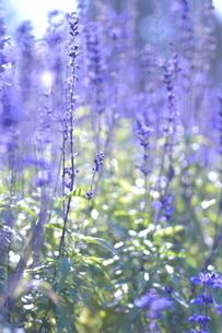 花の写真素材 [FYI03409743]