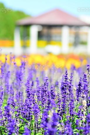 花畑の写真素材 [FYI03409745]