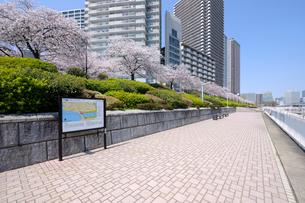 満開の桜の咲く石川島公園の写真素材 [FYI03409841]