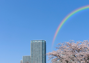 虹と桜と高層タワーマンションの写真素材 [FYI03409852]