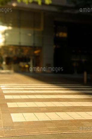 夕日の差す丸の内仲通りの石畳の横断歩道の写真素材 [FYI03409872]