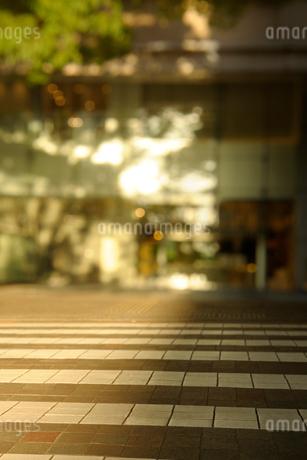 夕日のあたる丸の内仲通りの店舗と横断歩道の写真素材 [FYI03409873]
