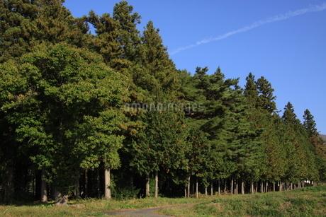 森林の写真素材 [FYI03409898]