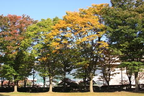 紅葉の木々の写真素材 [FYI03409913]