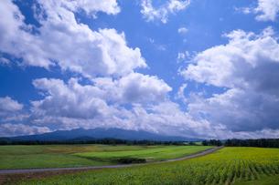大雪山国立公園 日本 北海道 上川郡の写真素材 [FYI03410436]