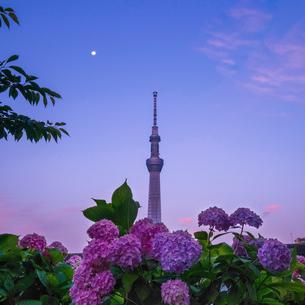 隅田川 日本 東京都 中央区の写真素材 [FYI03410445]