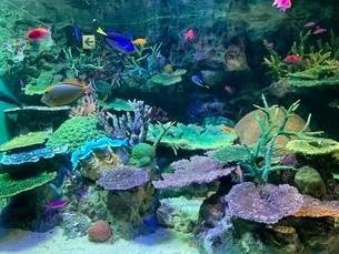 熱帯魚水槽の写真素材 [FYI03410588]