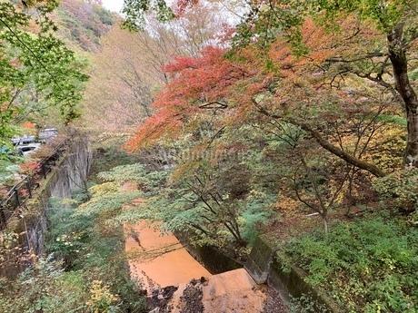 秋の写真素材 [FYI03410624]