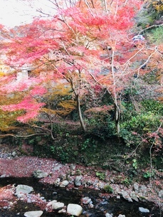 箕面の滝②の写真素材 [FYI03410715]