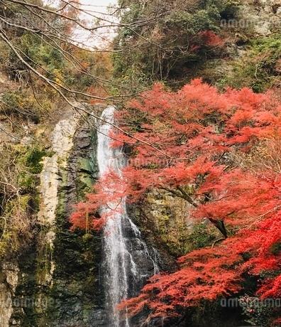 箕面の滝①の写真素材 [FYI03410716]