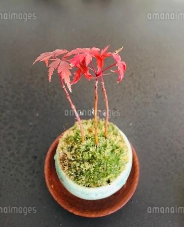 盆栽の写真素材 [FYI03410721]