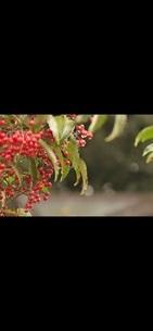 秋の写真素材 [FYI03410733]