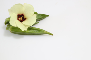 オクラとその花の写真素材 [FYI03410758]