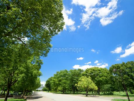 東京都 舎人公園の写真素材 [FYI03411149]