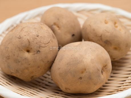 ジャガイモの写真素材 [FYI03411155]