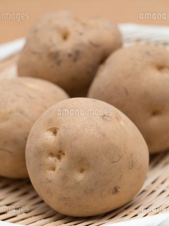 ジャガイモの写真素材 [FYI03411157]